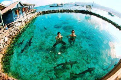 Penangkaran hiu Nusa Keramba