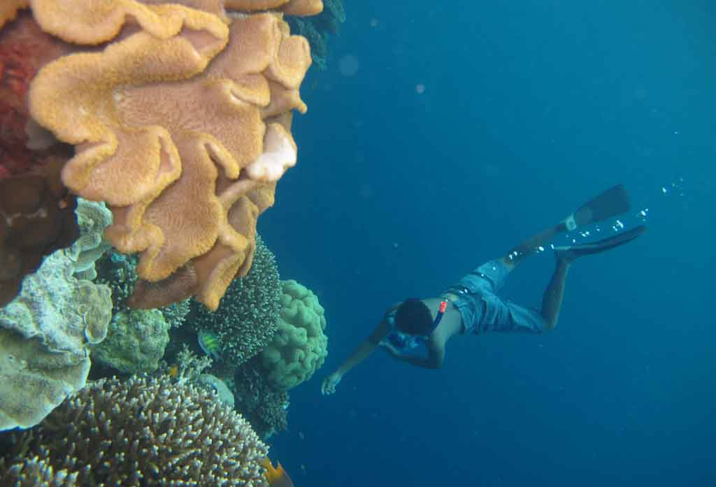 Freediving at Tomia - Wakatobi