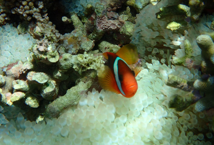 coral fish on snorkelling trip in gili island