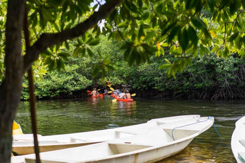 Mangrove forest - Nusa Lembongan