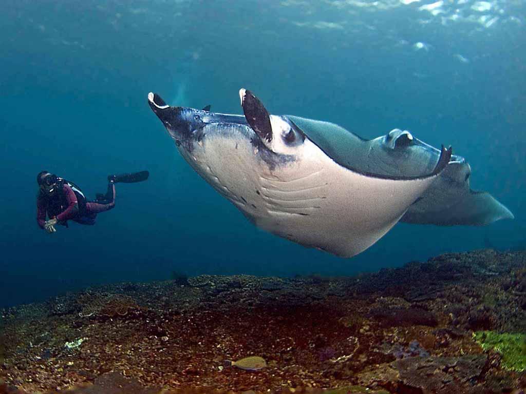 Manta point - Nusa Penida