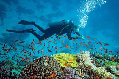 Best diving spot in Derawan islands