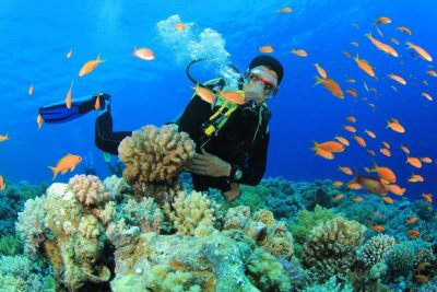 Colorful fish living around the reef in Derawan islands