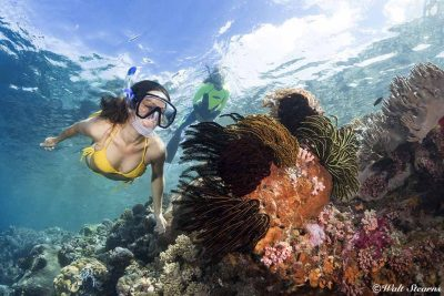 Snorkeling around Amazing coral reefs in Wakatobi
